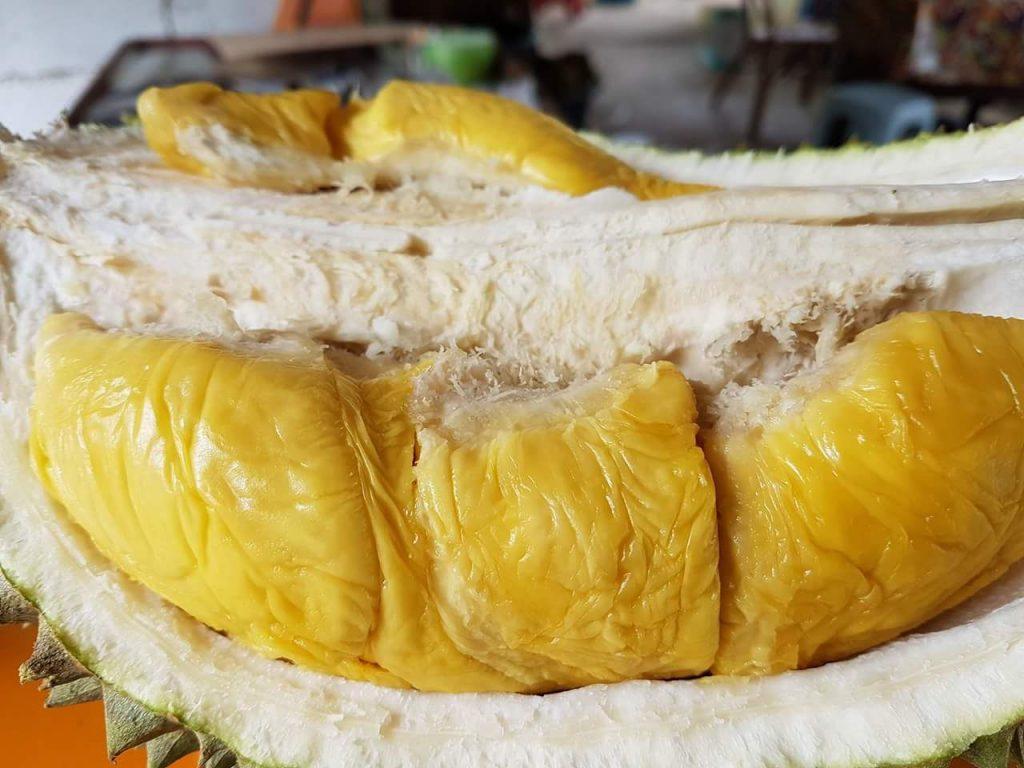 Daging Durian Lebih Tebal dan Lembut Creamy