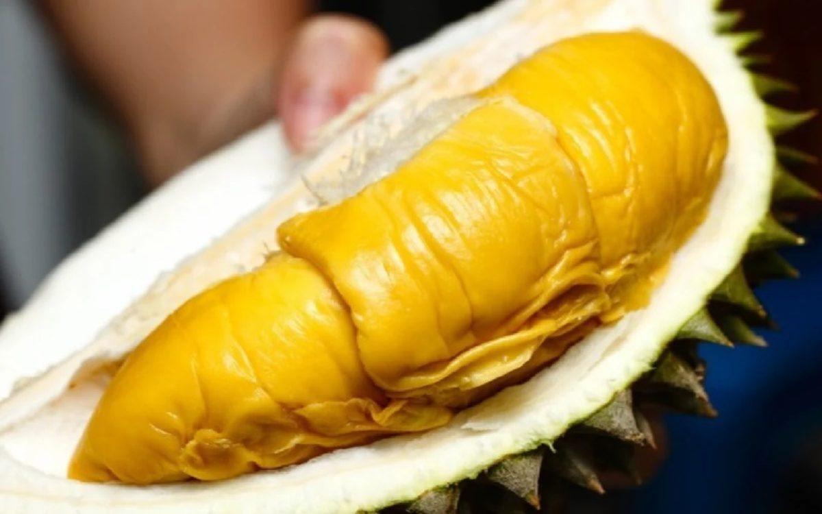 Keistimewaan-Durian-Musangking-yang-Populer